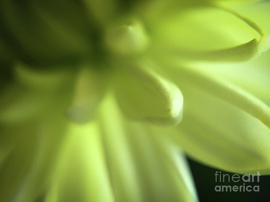 Floral Photograph - Floral Fantasy by Robert Yaeger