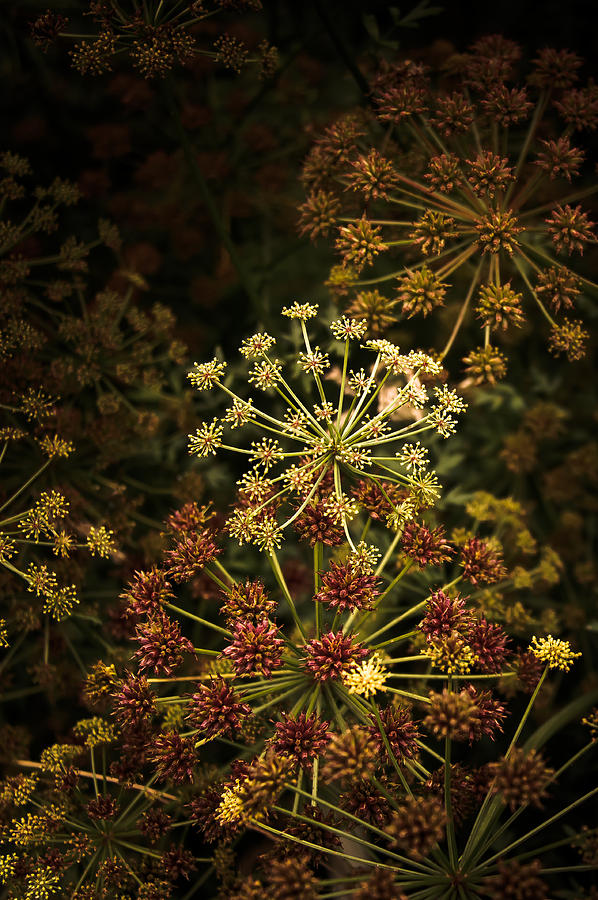 Photo Photograph - Floral Fireworks #02 by Loriental Photography