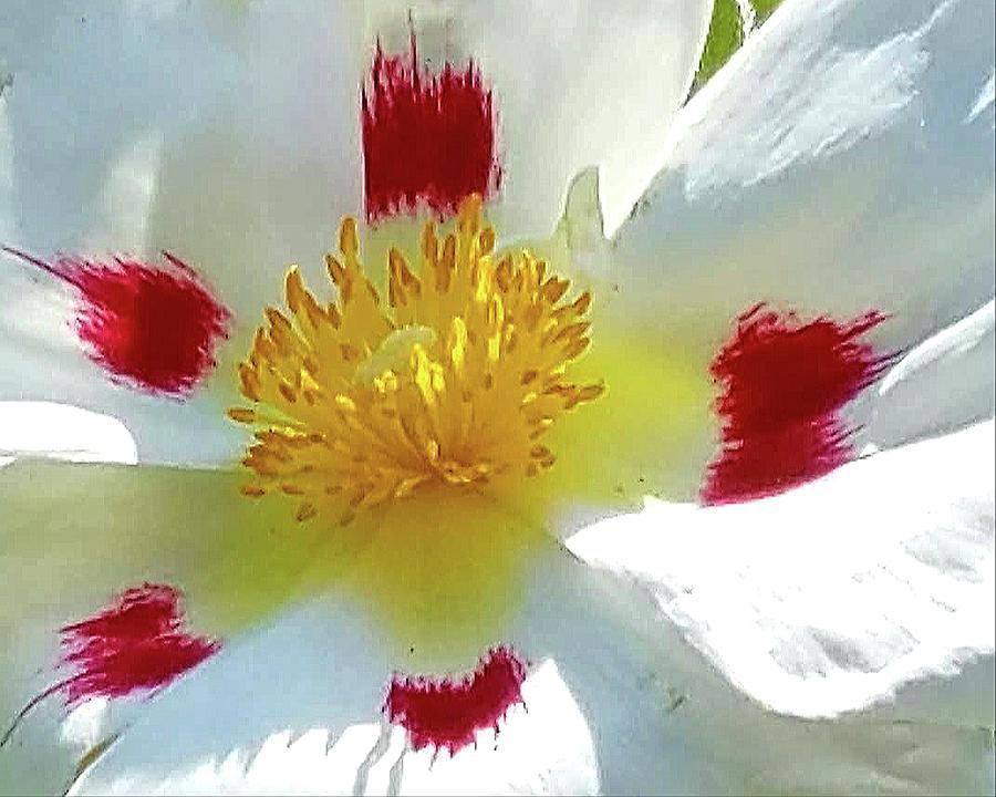 Floral Impressions by Suzy Piatt