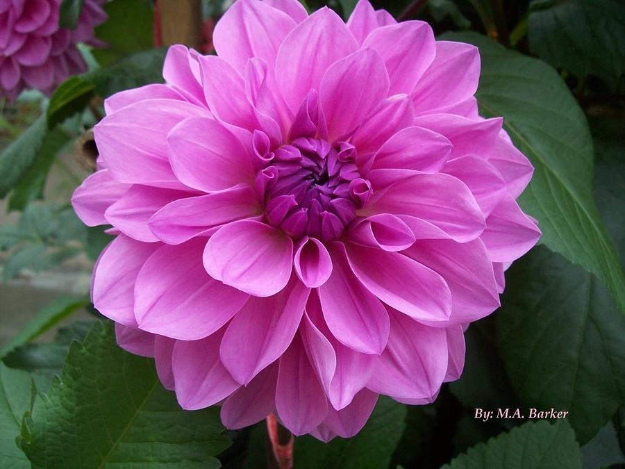 Centered Photograph - Floral In Pink by Mary ann Barker
