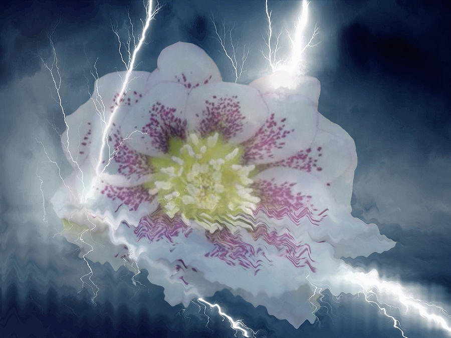 Floral Lightning Reflections by Dennis Buckman