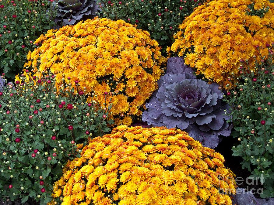 Chrysanthemum Photograph - Floral Masterpiece by Ann Horn
