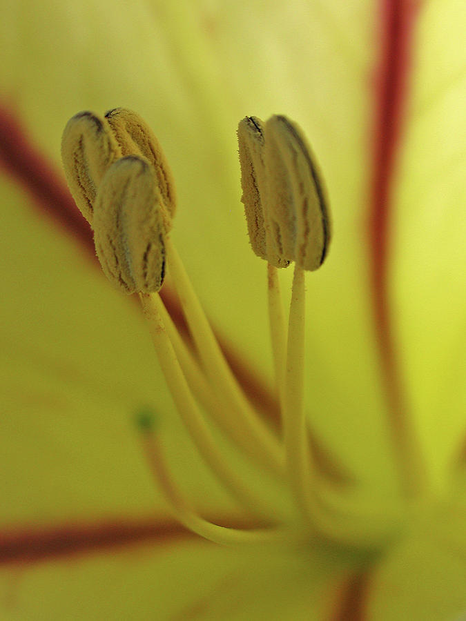 Flower Photograph - Floral Office Gossip by Juergen Roth