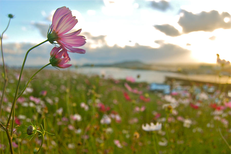Wild Flowers Photograph - Floral Sunset by Yen