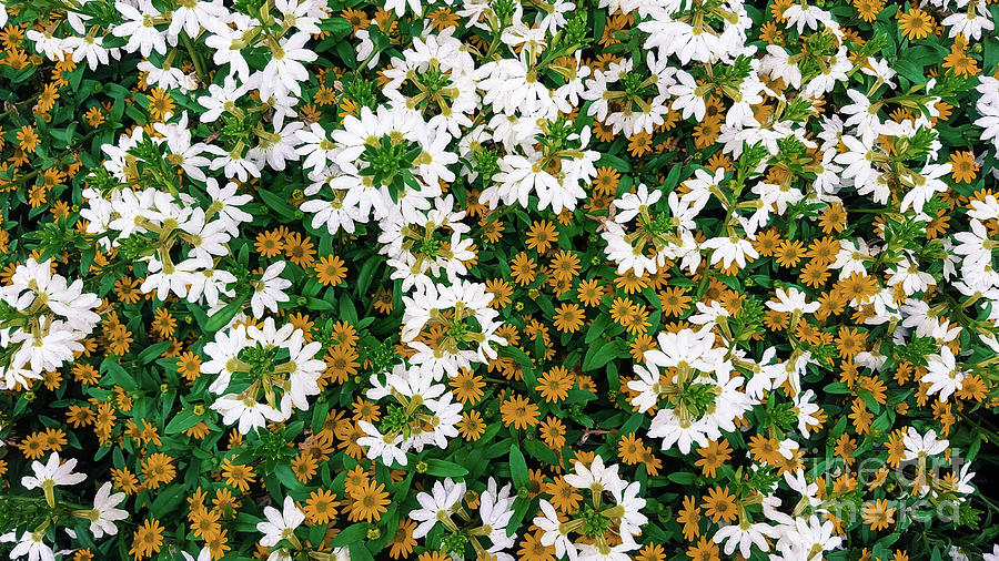 White Photograph - Floral Texture In The Summer by Cesar Padilla