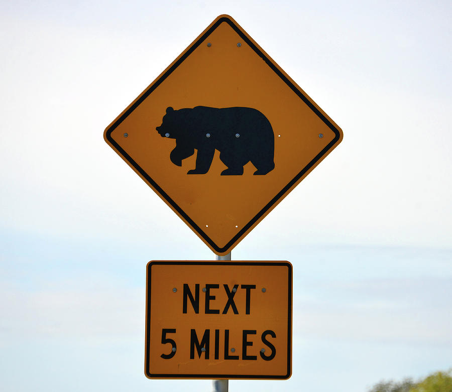 Florida Bear Crossing Sign Photograph By David Lee Thompson