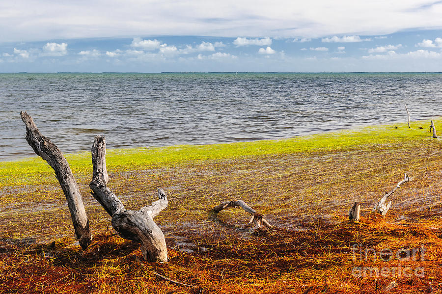 Ocean Photograph - Florida Keys Colors by Elena Elisseeva