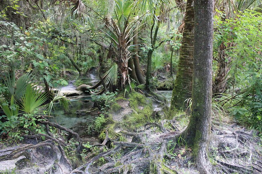 Florida Landscape Photograph - Florida Landscape - Lithia Springs by Carol Groenen