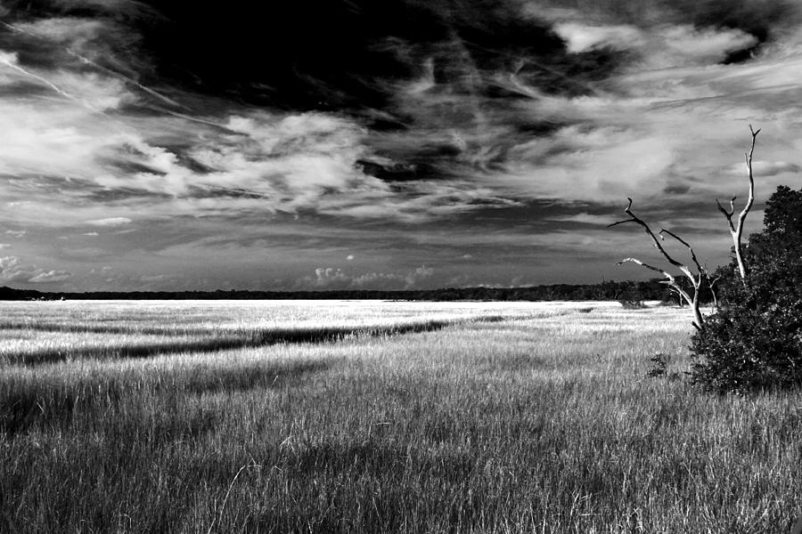 Florida Marsh Photograph - Florida Marsh by Marcus Adkins