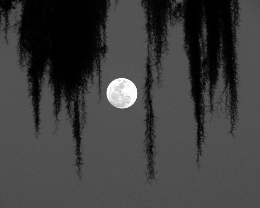 Nature Photograph - Florida Moon by Peg Urban