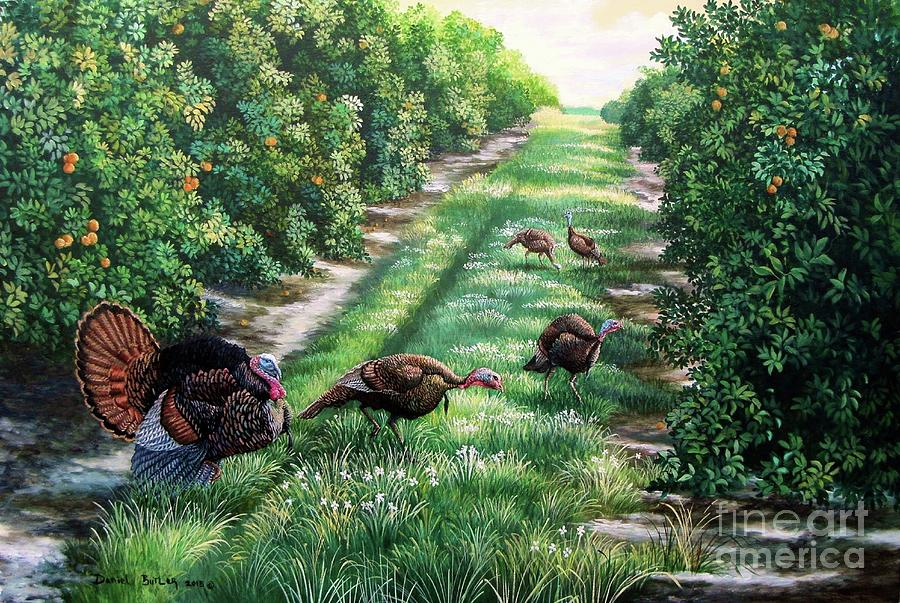 Florida Orange Groves Osceola Turkeys Painting By Daniel