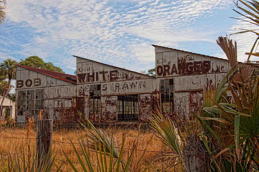 Florida Oranges by Keith Swango