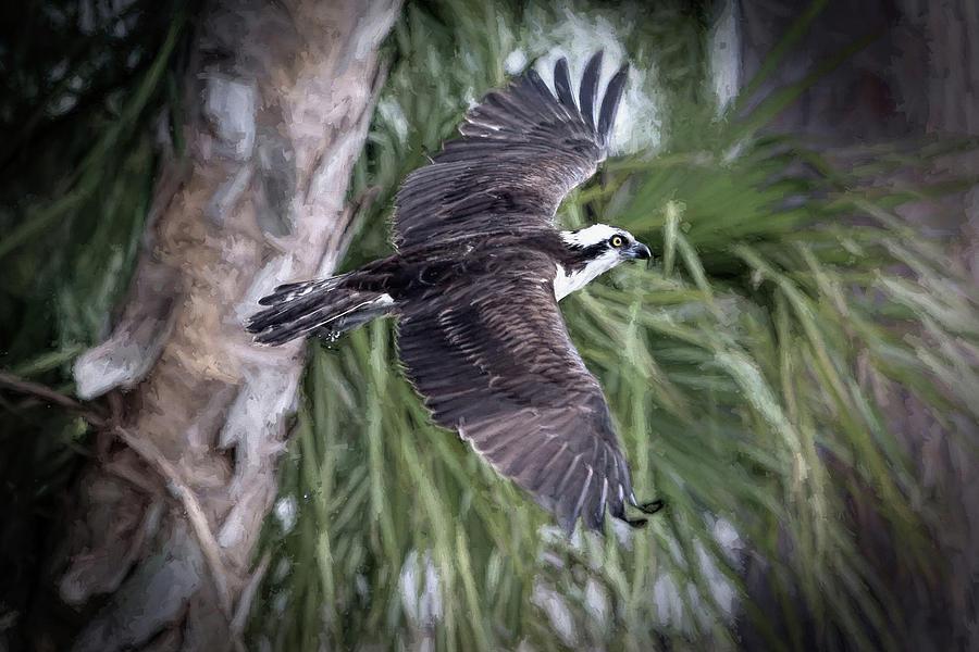 Osprey Photograph - Florida Osprey by Donna Kennedy