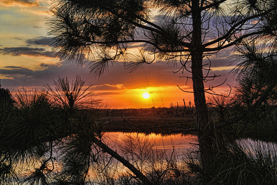 Tropical Sunset Photograph - Florida Pine Sunset by HH Photography of Florida
