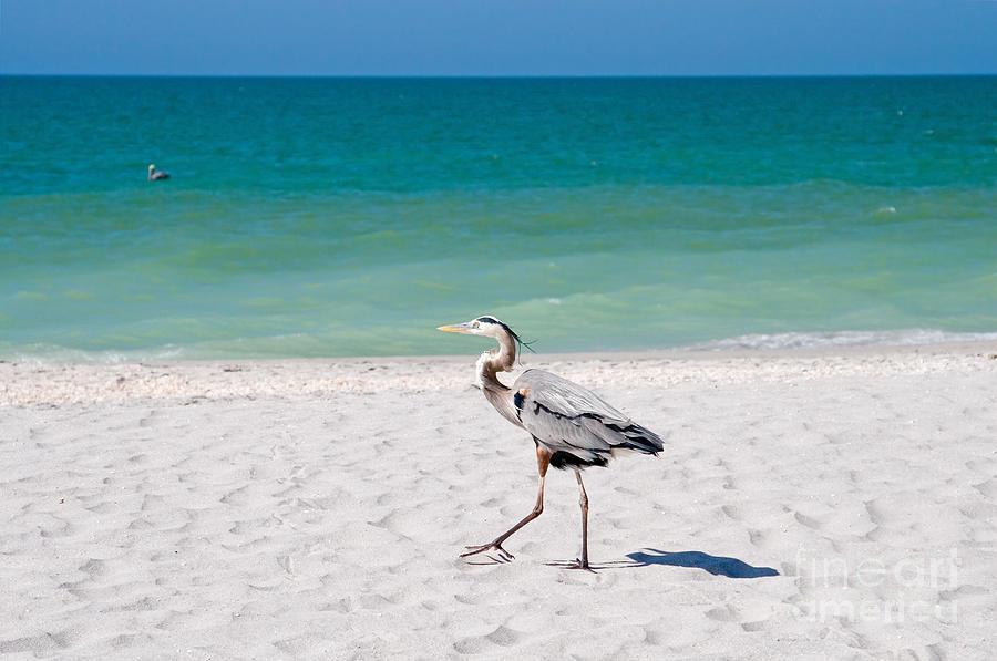 Beach Photograph - Florida Sanibel Island Summer Vacation Beach Wildlife by ELITE IMAGE photography By Chad McDermott