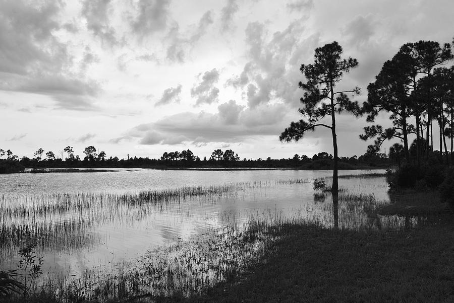 Florida Photograph - Florida Scene by Steven Scott