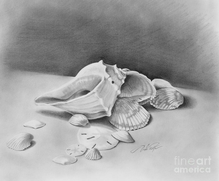 Seashells Drawing - Florida Shell Study by Joseph Palotas