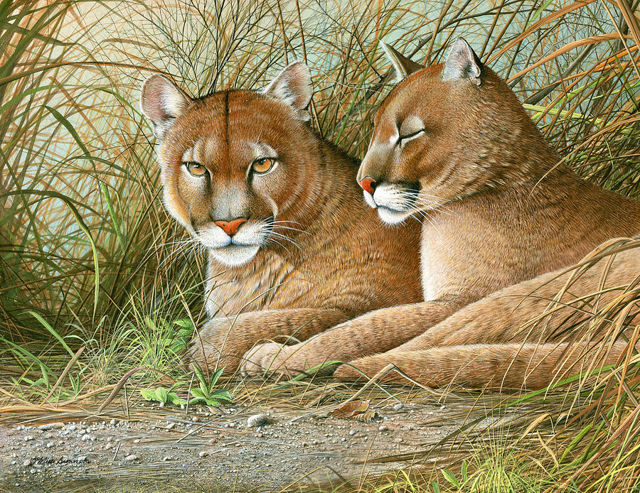 Panther Painting - Florida Siblings by Mike Brown