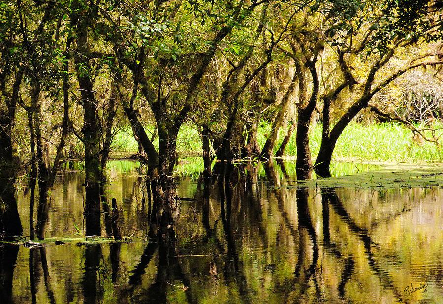 Florida Swamp Photograph