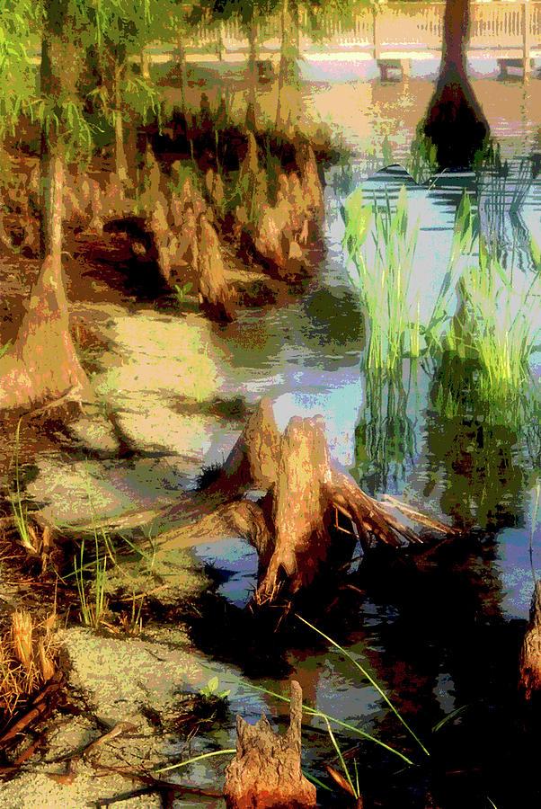 Florida Photograph - Florida Swamplands by Rianna Stackhouse