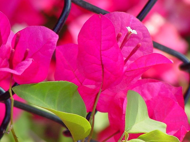 Floral Photograph - Florida by Tony Canzoneri