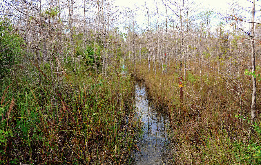 Hiking Photograph - Florida Trail Big Cypress by David Lee Thompson