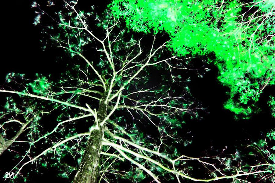 Florida Tree Tops by Gina O'Brien