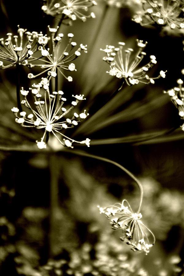 Flos N. 9 Photograph by Eniko Lorinczi