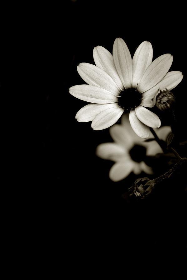 Flower Black And White Photograph - Flos N.2 by Eniko Lorinczi