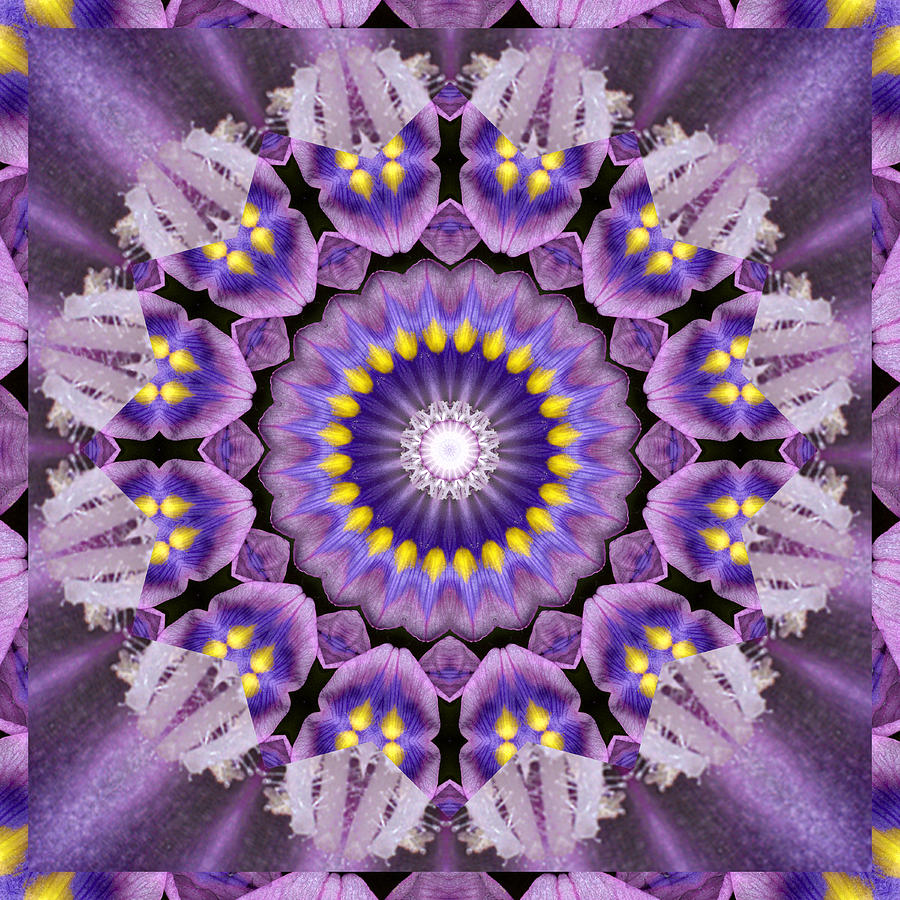Mandalas Photograph - Flow by Bell And Todd