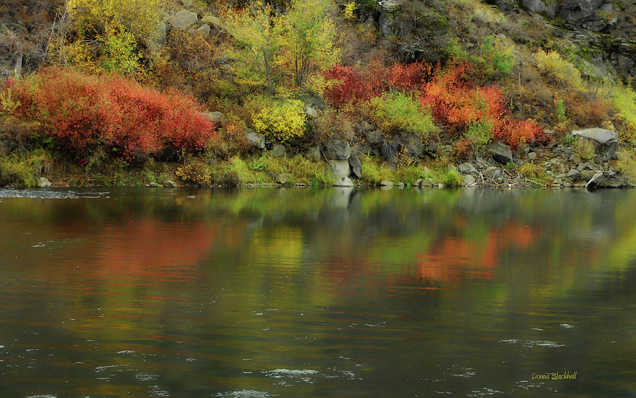 River Photograph - Flow Of Autumn by Donna Blackhall