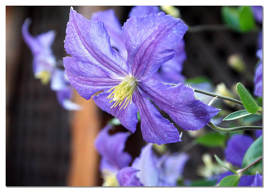 Flower Photograph - Flower 1 by Dustin Lynch