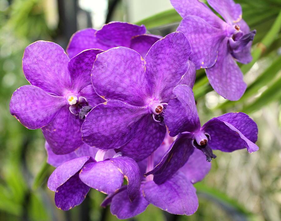 Flower 1 by John Olson