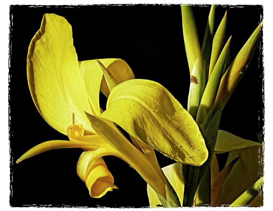 Flower 29f, Ny, 16 Photograph by Richard Xuereb
