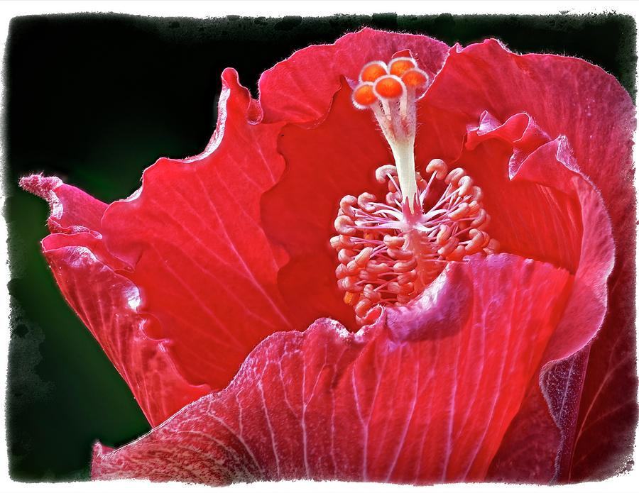 Flower 30f, Ny, 16 Photograph by Richard Xuereb
