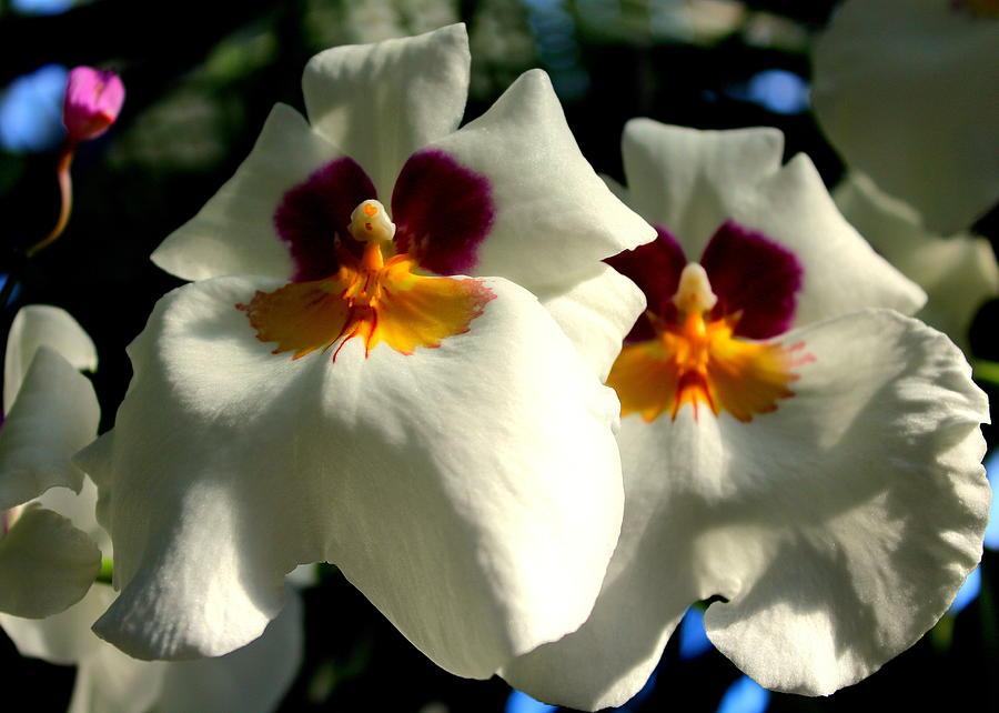 Flower 4 by John Olson