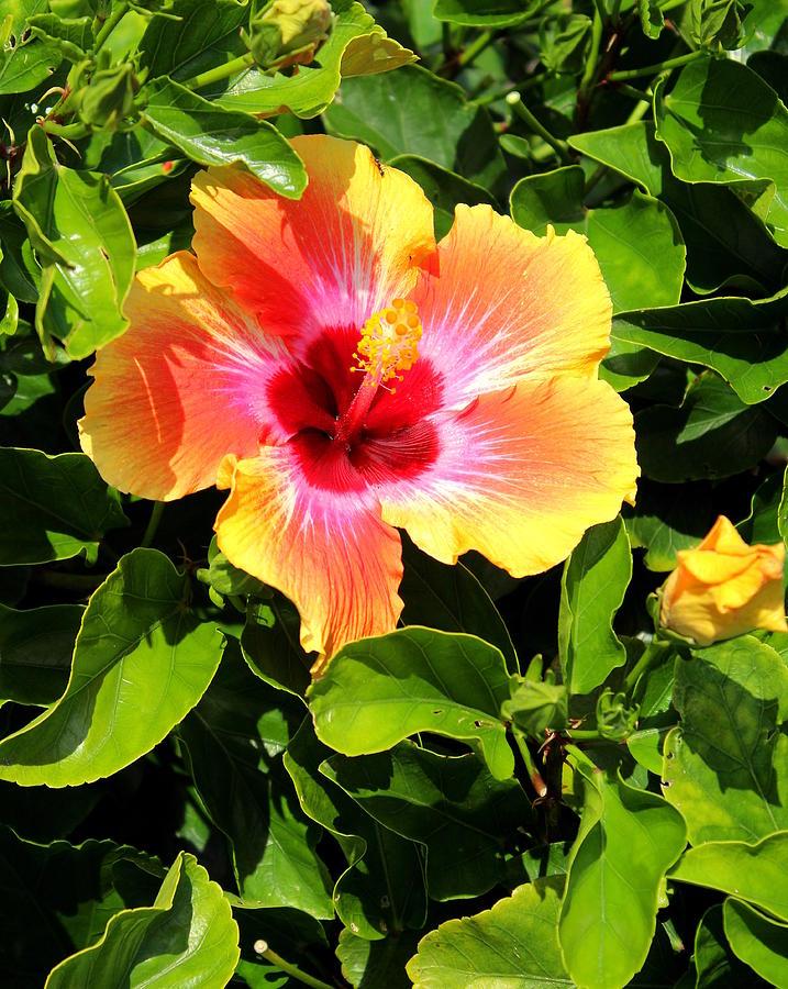 Flower 7 by John Olson