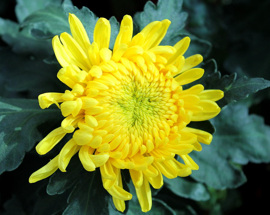 Flower 8 by John Olson