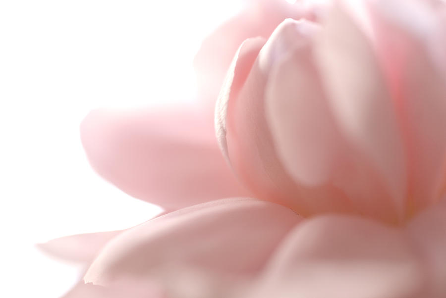 Pink Photograph - Flower Abstract by Jessica Wakefield