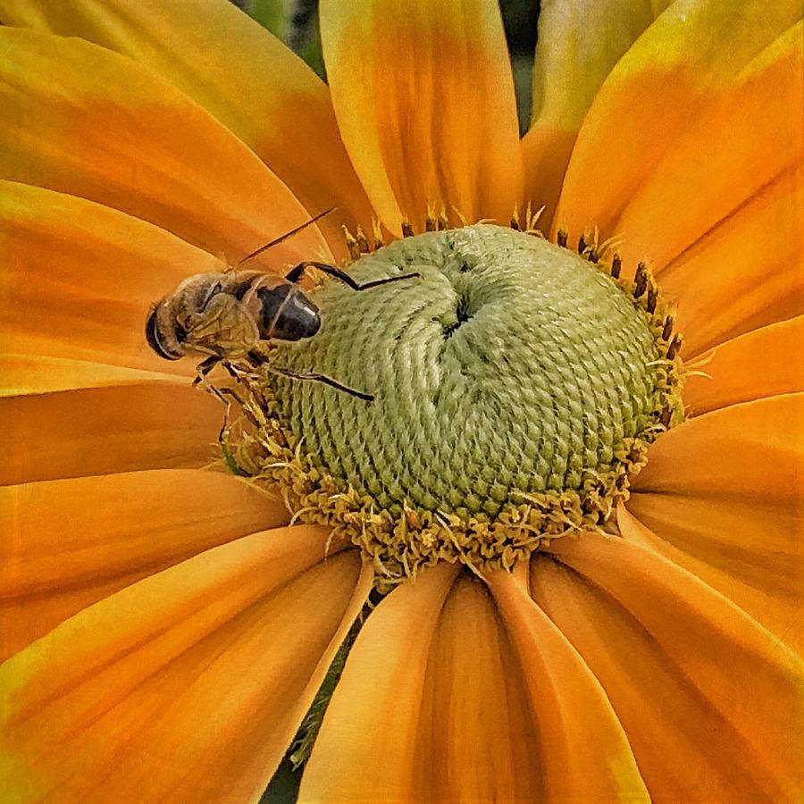 Flower and Bee by Patricia Januszkiewicz