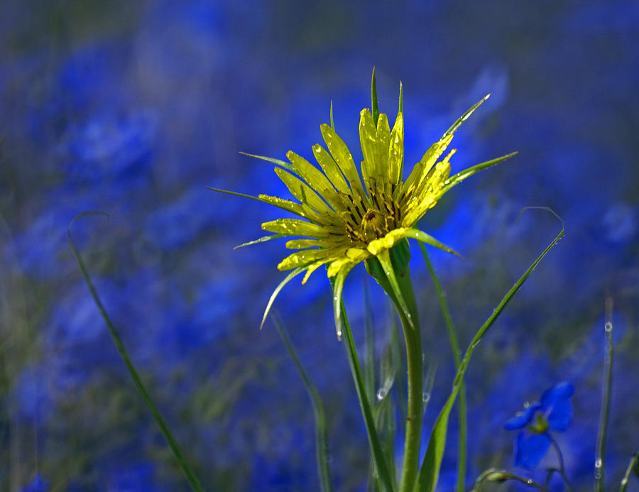 Flower And Flax Photograph