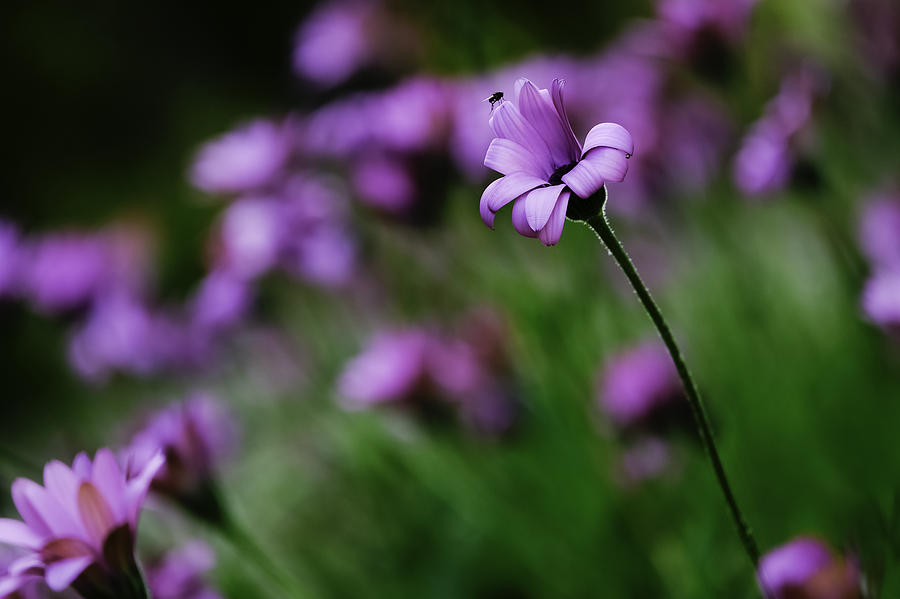 Flower Photograph - Flower And Fly by Wendy Chapman