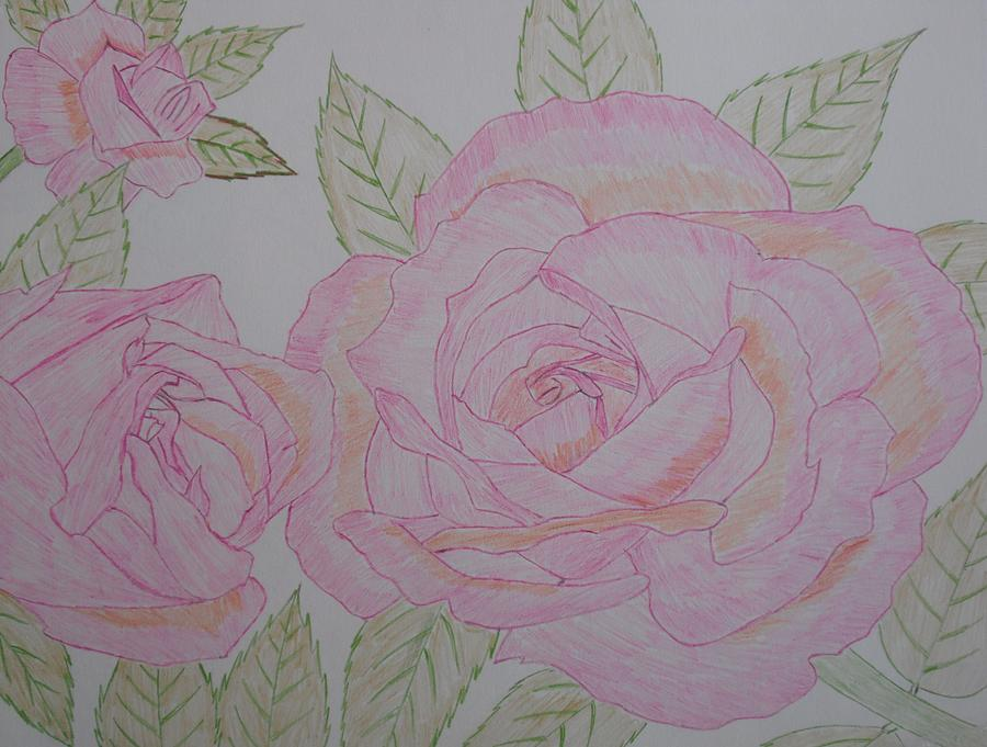 Rose Drawing - Flower by Arold Augustin