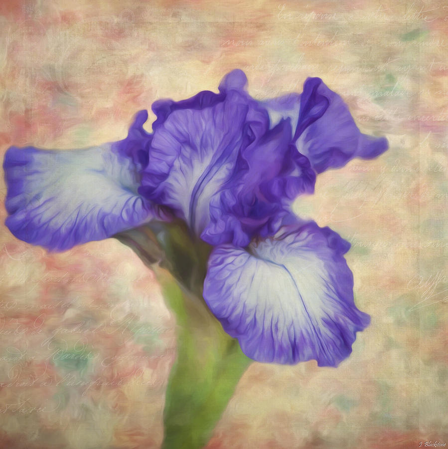 Flower Art The Meaning Of An Iris Painting By Jordan Blackstone