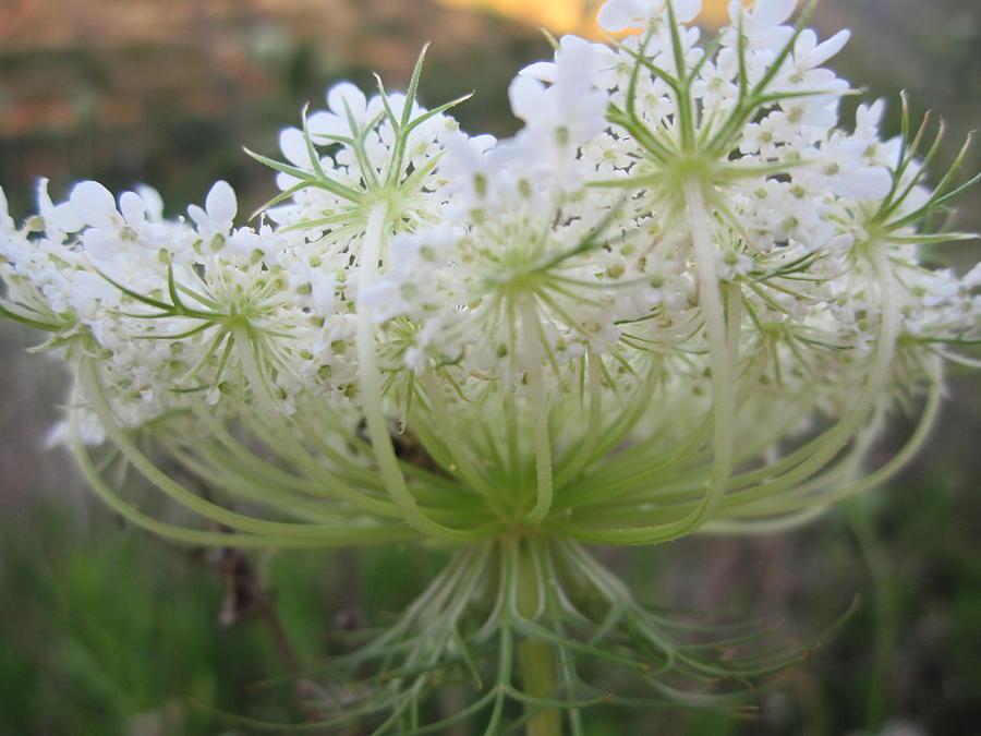 Nature Photograph - Flower by Barbara Jonca