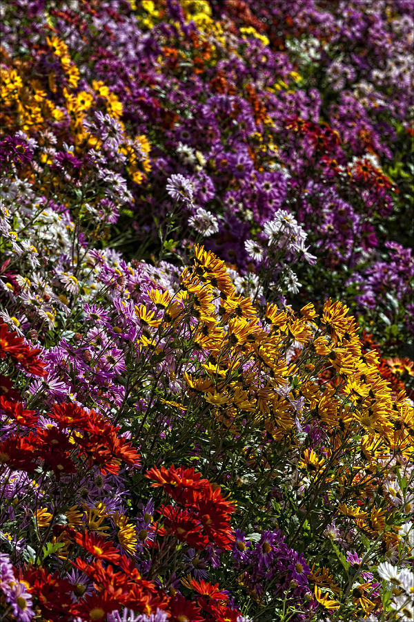 Flower Bed 4 Photograph