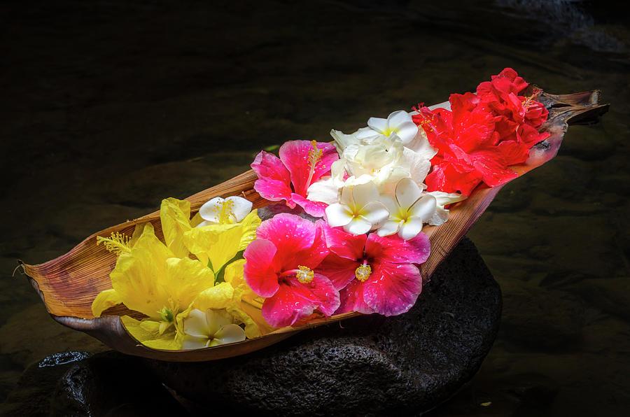 Flowers Photograph - Flower Boat by Daniel Murphy
