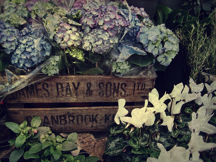 Hydrangeas Photograph - Flower Box by JAMART Photography