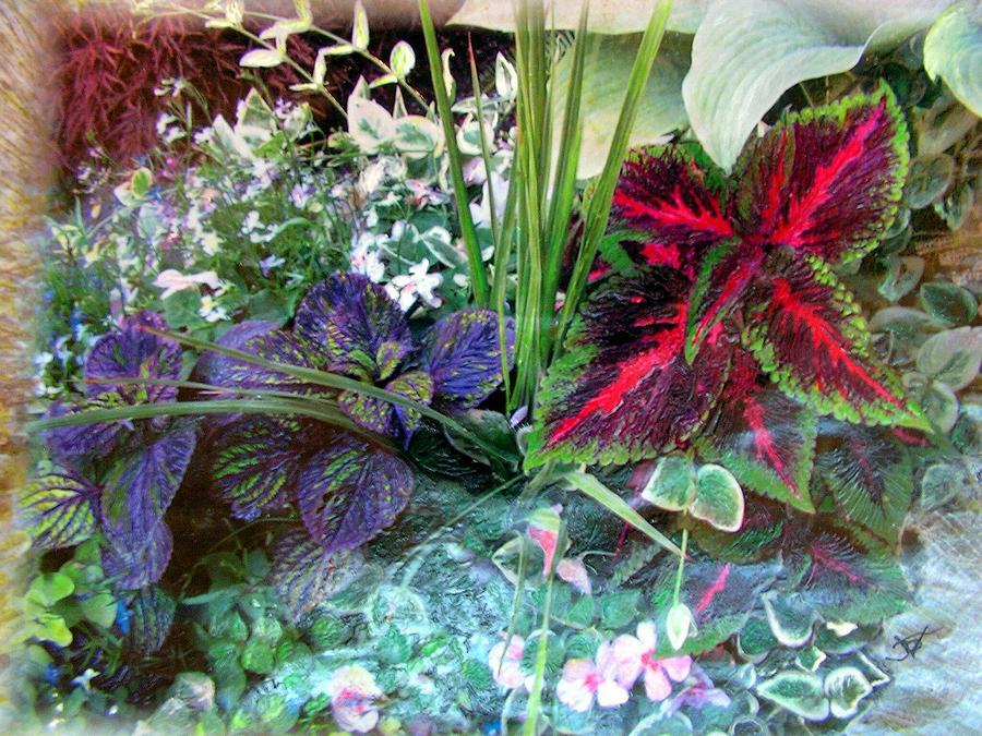 Flower Box Mixed Media - Flower Box by John Vandebrooke