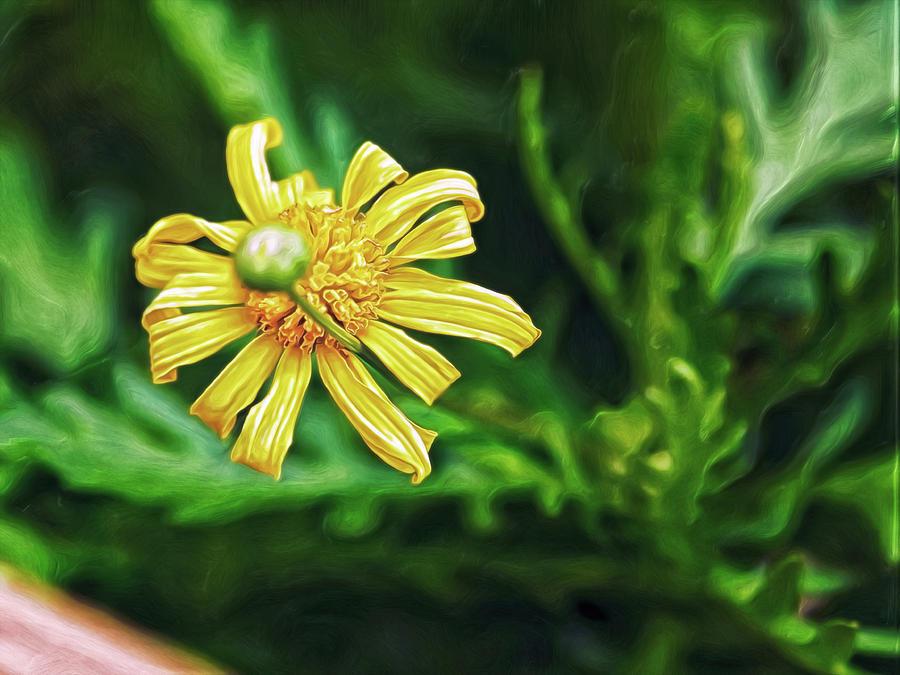 Flower and Bud Digital Art by Doctor MEHTA
